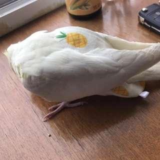 [Pre-order] Bird parrot toy - Diaper/Flight suit