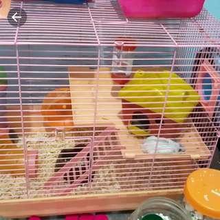 Kandang hamster + hamster 4 full set