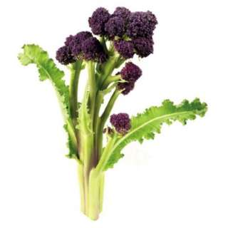 Purple Sprouting Broccoli (Brassica Oleracea) Vegetable Heirloom, 2g Of Seeds
