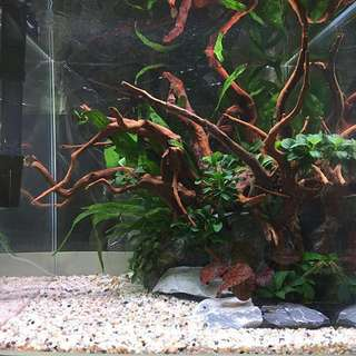 1ft planted cube tank