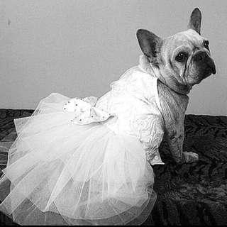 🚚 寵物婚紗🐶