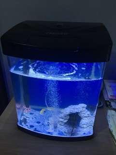 Fish tank classica