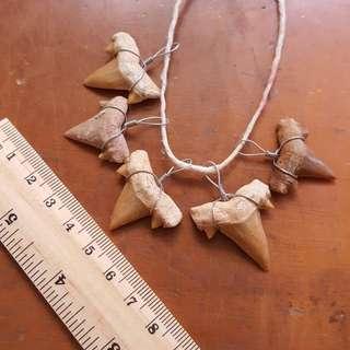 5 x Cretolamna Shark Teeth Pendant Necklace