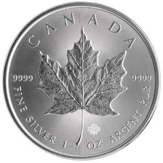 1oz Canadian Maple Leaf Coin
