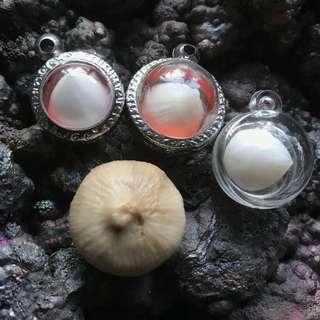 Kelapa / Coconut Pearl Pandant