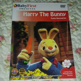 Babu First- Harry the bunny