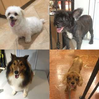 Pet grooming /boarding services