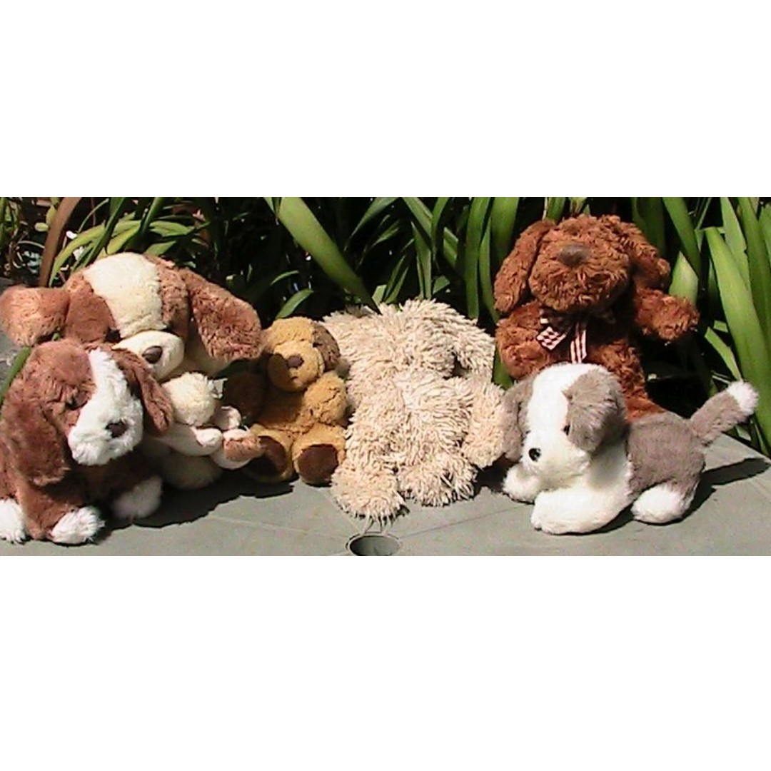 Toy Dog Collection