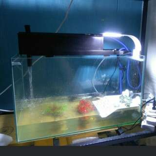 2ft fishtank with accessories