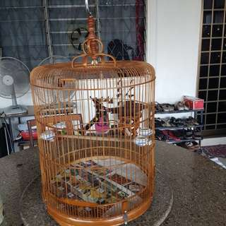 Shama cage 18inches