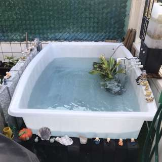 Fish pond Fish tank