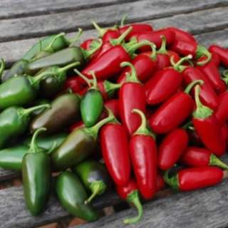 Organic Hot Chili Pepper 'Jalapeno Traveler Strain' (Capsicum Annuum) Heirloom, 10 Seeds