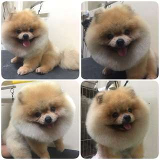 Professional Dog grooming with more than 20 years experience