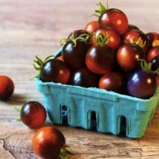 Organic Artisan Cherry Tomato 'Indigo Cherry Drops' (Solanum Lycopersicum) Vegetable Heirloom, 10 Seeds