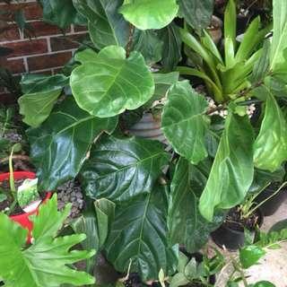 Variety Of Indoor, Outdoor Plants