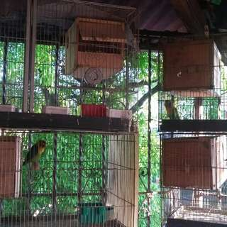 PROVEN PAIR/CAGE