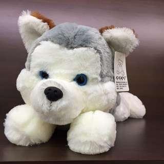 Husky Fluffy