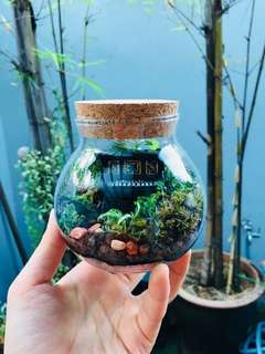 Terrarium: Piano Forest