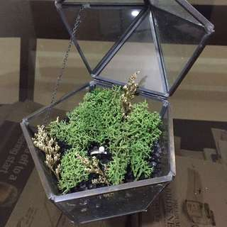 Glass Prism with garden moss