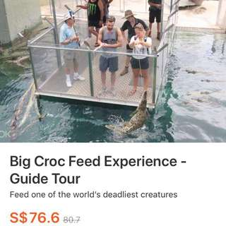 Discounted Big Croc Feed Experience - Guided Tour Tickets