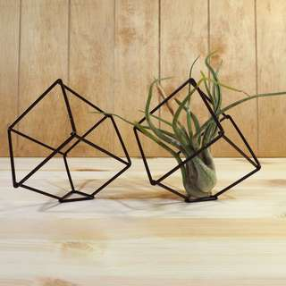 Air Plant Stand Cube