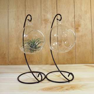 Air Plants Stand Glass ball