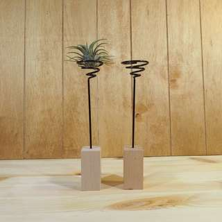 Air Plant Stand  Wooden