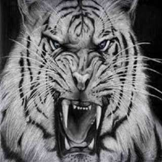 khodam harimau putih,puteri,dll
