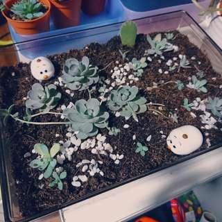 Succulent Cactus terrarium