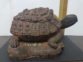 Banjarpaki tortoise