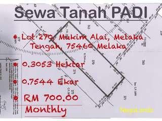PADDY Land Rental