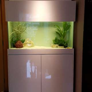 Customised Fish Tank with cabinet