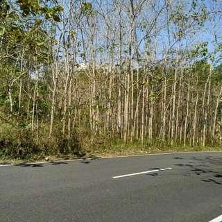 Tanah jalan propinsi Wonogiri-Jateng