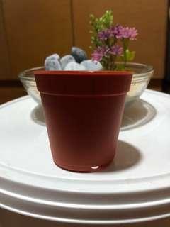 Grow your own plant mini pot
