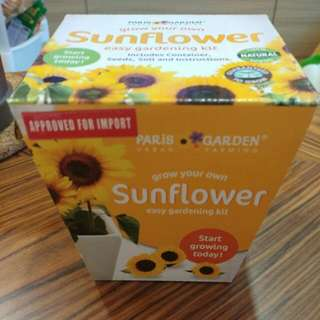 Grow your own 🌻🌻sunflower - Paris Garden kit