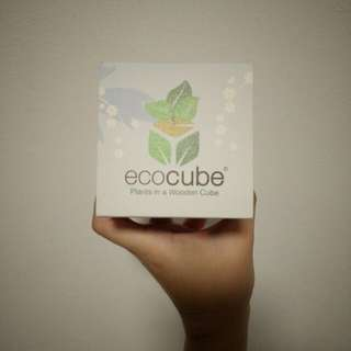Eco Cube Plant (Forget Me Not)