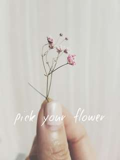 Pick your Fleur - Dried flowers