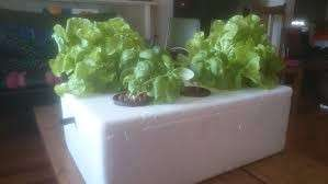Hydroponic kit set( seeds, pots, media, nutrient solution)