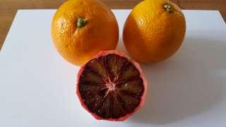 20 Italian Blood Orange Seeds