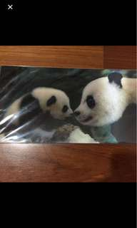 Panda (mum & child) Post Card