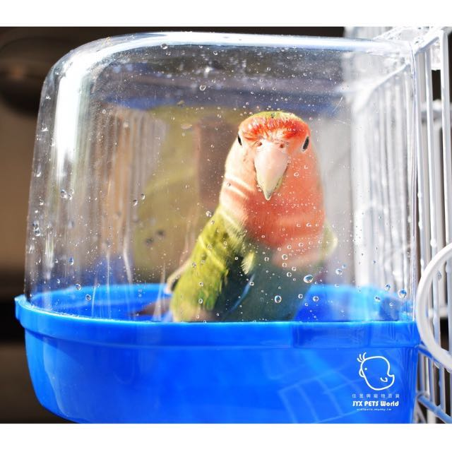 鸚鵡外掛澡盆