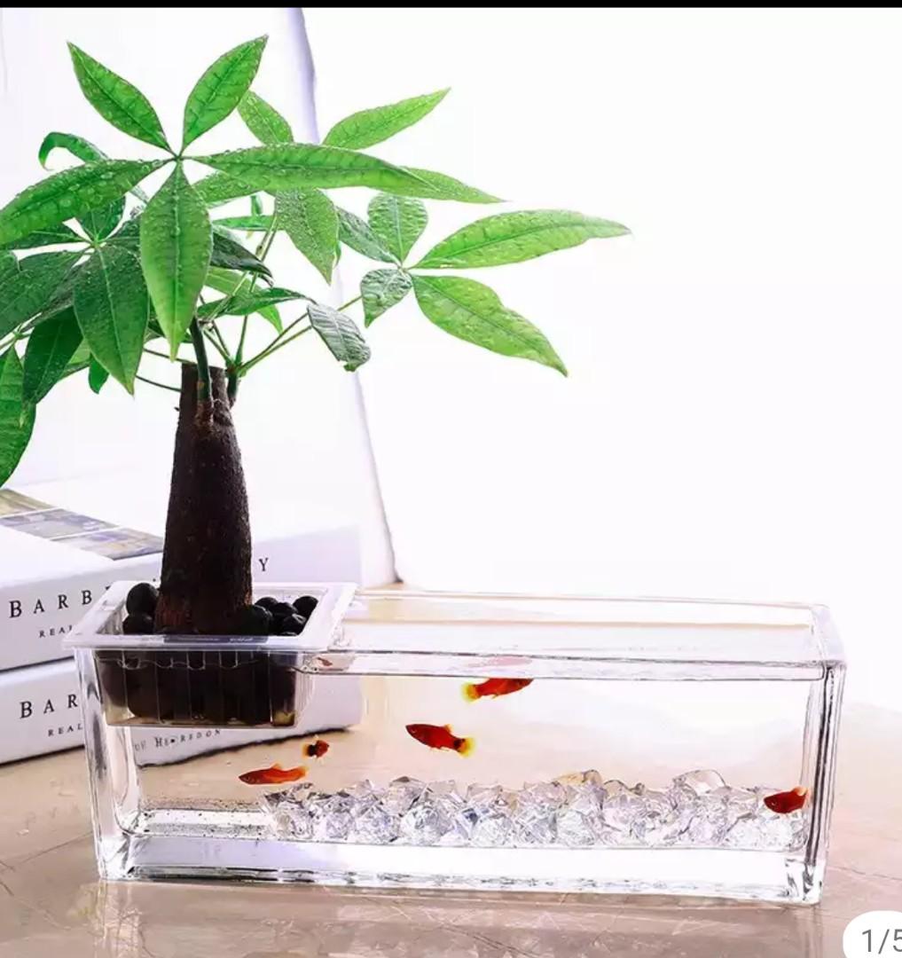 Rectangular Aquaphonic Rectangle Hydrophonic Glass Planter Fish