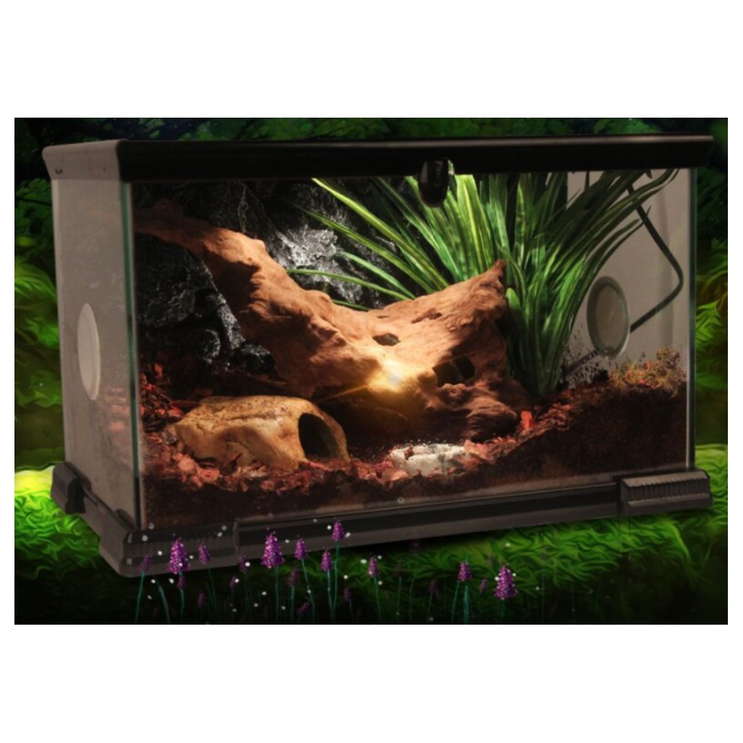 Terrarium Vivarium Japanese Design For Plants Exotic Pets Frog
