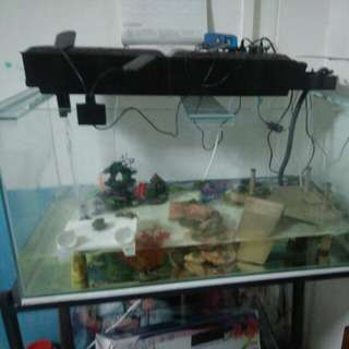 Fish Tank 3ft whole setup