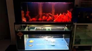 5ft fish tank 522