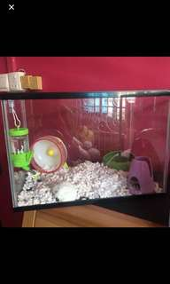 Hamster Aquariam
