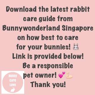 Guide on Proper Care for Rabbits from SG Bunnywonderland