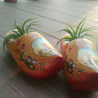 Air plant in Holland wooden shoe