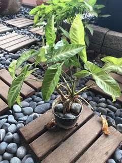 Plants plus pot