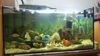 Aquarium (3 Feet)